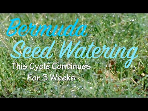Southern Lawn Rehab - Bermuda - Watering Grass Seed