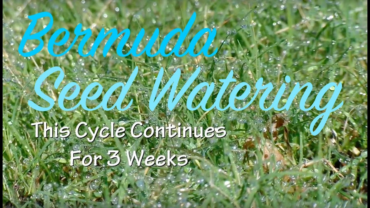 Southern Lawn Rehab - Bermuda - Watering Grass Seed - YouTube