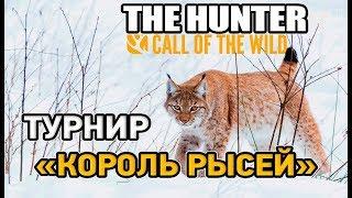 the hunter call of the wild # Турнир