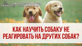 Как отучить вашу собаку реагировать на других собак? Простое упражнение для прогулки