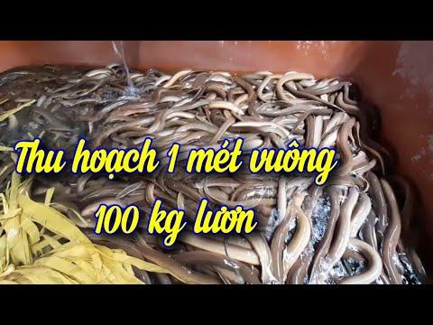 (DON'T) DO SOMETHING - Cấu trúc văn nói - Thắng Phạm from YouTube · Duration:  17 minutes 52 seconds