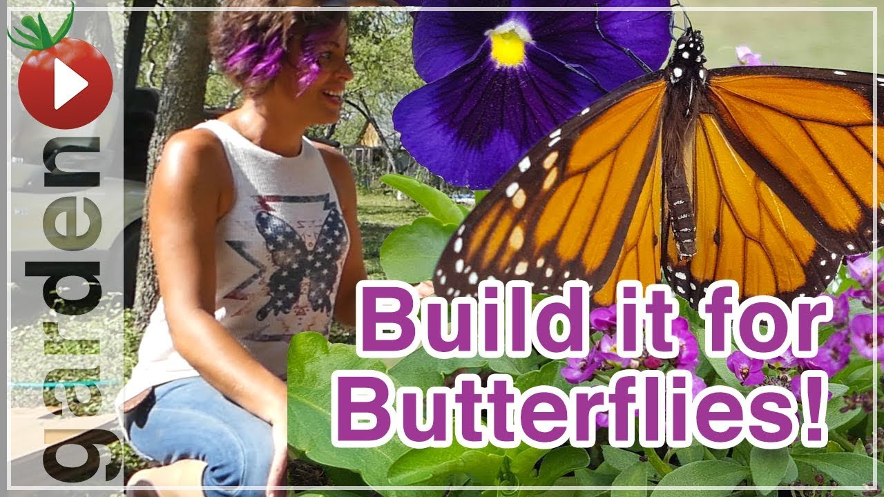 Building A Butterfly Garden   With Drake White The Butterfly Lady   Part 1