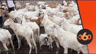Le360.ma • Mali: le marché à bétail de la fête de tabaski