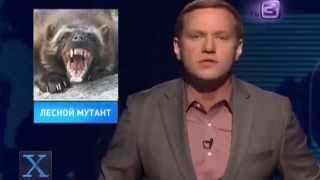 Чупакабра оказалась енотовидной собакой \ Chupacabra was a raccoon dog