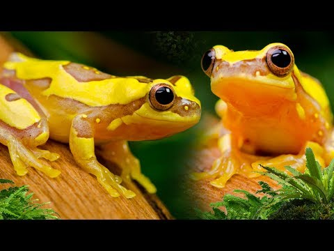 "Naturalistic/Bioactive Terrarium Plant Up "" Hourglass Frogs"" 