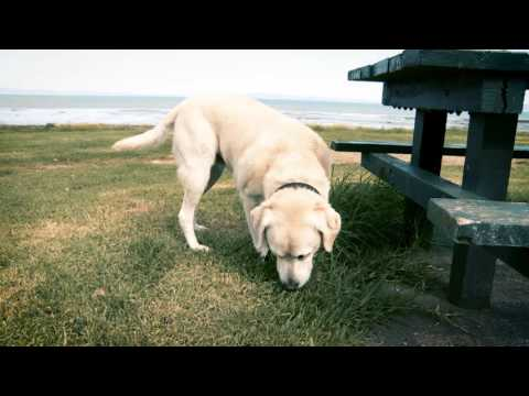 NZ Councils Dog Registration video