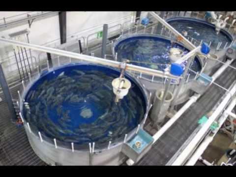 Superior Aquaculture