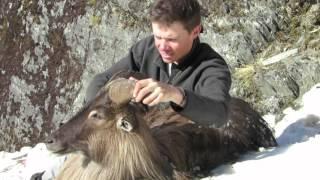 Wilderness back pack tahr hunt - Lake Hawea Hunting Safaris