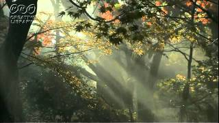 Komorebi...Sunbeams streaming through the leaves of trees 押尾さん...