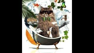 かわいい猫の作り方 ~Photoshop~ オシャレなフォトコラージュ。