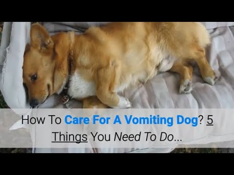 How To Care For A Vomiting Dog? 5 Things You Need To Do...