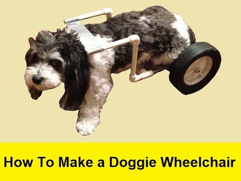 How To Make a Doggie Wheelchair for $25