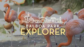 Virtual Explorer Experience: San Diego Zoo