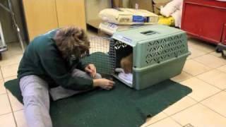 Crate Training Rusty.m4v