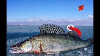 Весенний СУДАК! НАКОНЕЦ-ТО! Рыбалка в Казахстане 2020!