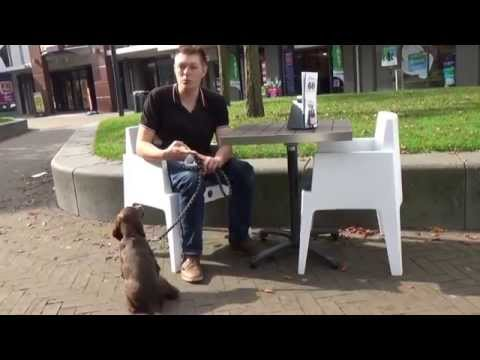 Dog School: Puppy socialiseren in de stad