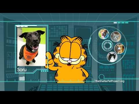 Shelter Pet Project – Garfield PSA :30