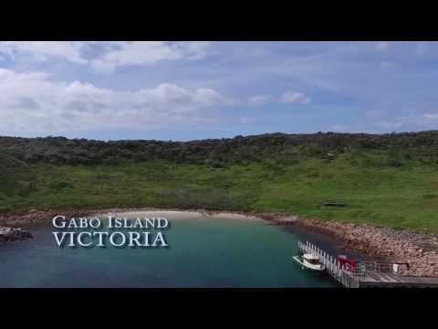 Uaviation Drone Weed Detection and Mapping - Gabo Island