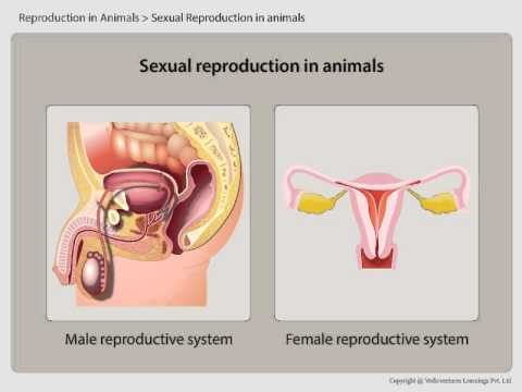 Reproductive parts in humans cbse 8th science youtube reproductive parts in humans cbse 8th science ccuart Images