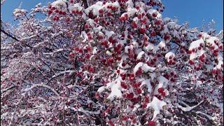 Фото Деревья во льду в 4К 2160р. Зимние красоты. Релакс-видео. Зимние футажи для скачивания.
