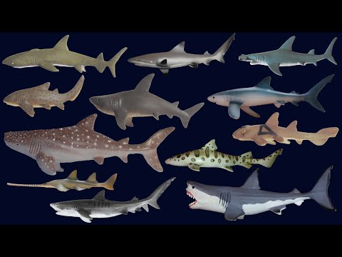 Sharks - Animals Series - The Kids