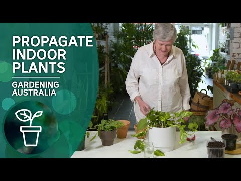 Four ways to propagate popular indoor plants