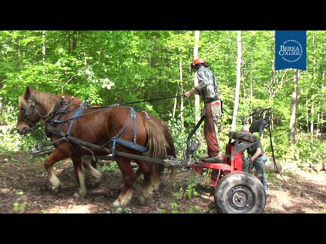 Horse Logging at Berea College