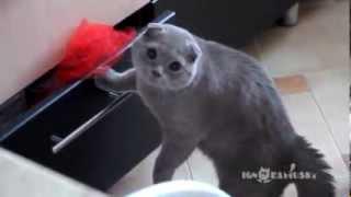 Кот понял что попался ахаха !!! смотреть всем!!!