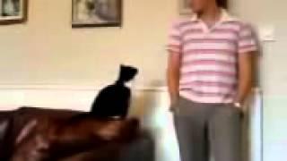 Кот напакостил и просит прощения  Очень смешно