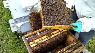 Arıcılık arı bakımı 3.kat gelsin diyor. arıçılıq  Bienenzucht пчеловодство  beekeeping  apiculture