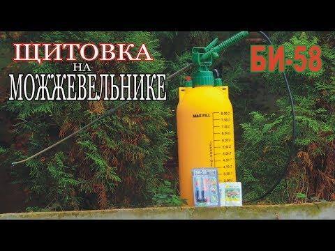 Болезни можжевельника/мучнистый червец испортил деревья/обработка БИ-58