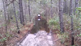 Francis Marion National Forest 2/28/15.