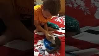 Как моя кошка Мая играется