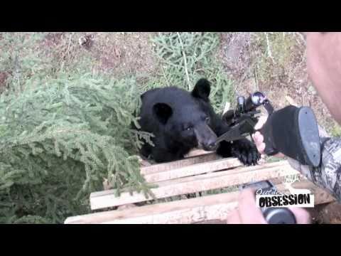 Bear Chews On Gun!!!