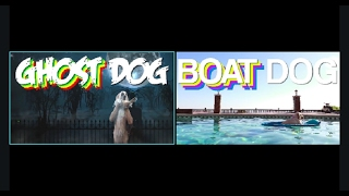 Boat Dog And Ghost Dog | 10 Minute Loop |