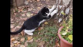 Так вырастают котята. Они могут быть вашими.
