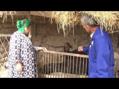 Privatizing Central Asia -- success against brucellosis in Tajikistan