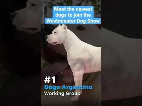 Which dog are you most excited to see at the Westminster Dog Show this year? #WKCDogShow