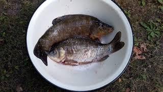 Рыба гриль. Готовим рыбу на мангале.