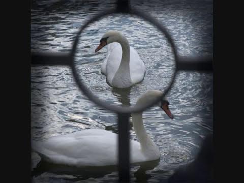 Трек И. Панин - Не стреляйте в белых Лебедей. Миша Шуфутинский в mp3 192kbps