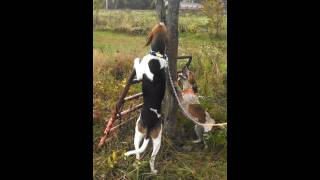 Popular Videos - Coonhound