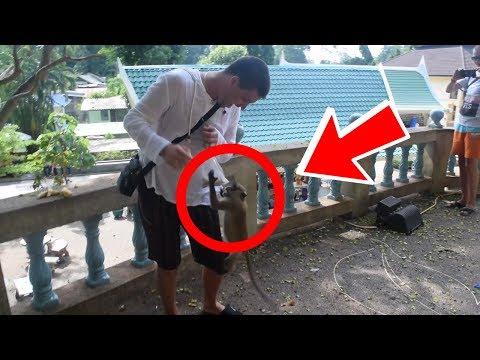 Тайланд Пхукет обезьяна напала и украла