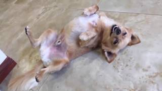 TRY NOT TO LAUGH-Funny Animals Fails Compilation 2016 (Part 11)