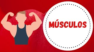 Os músculos - Estudo do Meio 1º ciclo - O Troll explica.