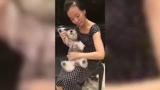 #12 Новые свежие приколы с животными смех до слез ...
