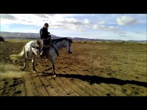 Sale Video for Grey Horse 2015