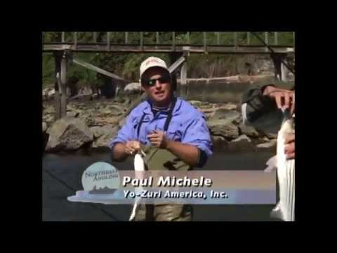Striped Bass and Bluefish- Long Island Sound, NY Beaches