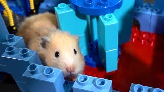 Hamster Lego Obstacle Course - Escape from the Castle!