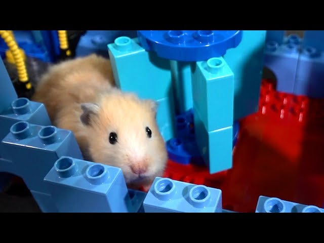 Hamster Lego Obstacle Course – Escape from the Castle!