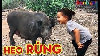 Giật Mình Khi Thấy Heo Rừng ĐEN Cực Ngầu (Meet Big Pig) 💓 BunBun Kids TV